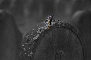 Picture of a tombstone in the rain with a butterfly