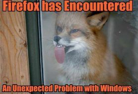 Picture of a fox with his tongue stuck on a window